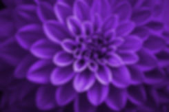 AdobeStock_313147796.jpeg