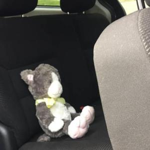 Zane in the van