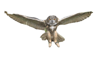 Owl%20Gif_edited.png