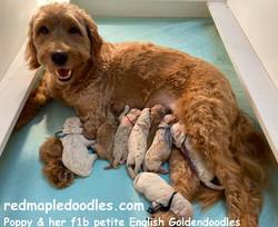 Poppy & pups