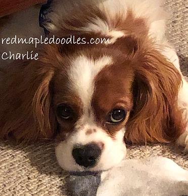 Charlie logo.jpg