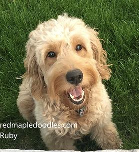 Ruby outside.jpg