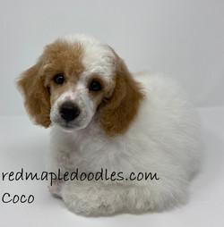 Coco 10