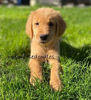 summer puppy.jpg