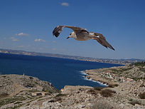 seagull_cleanup_sharpen2.jpg