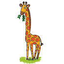 Animals giraffe.jpg
