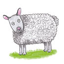 Animals sheep.jpg