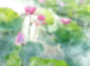lotus-2528456_1280.jpg