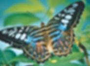 butterfly-4089197_1280.jpg