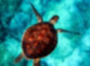 sea-2361247_1280.jpg