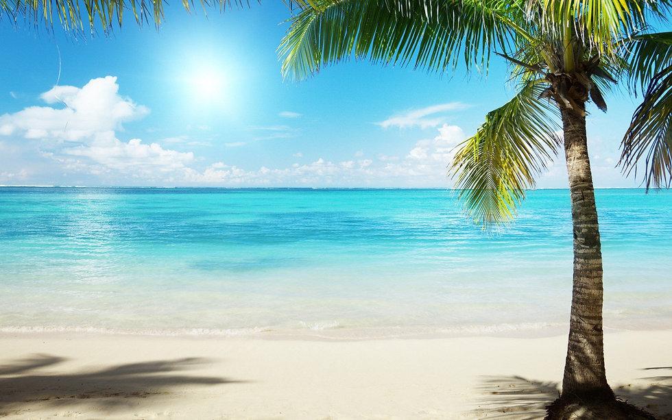 nature_palm_trees_sea_beaches_1920x1200.