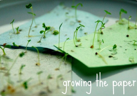 What is Plantable Seed Paper ?
