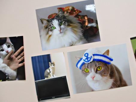 猫祭2021「ネコウォール」にかわいい愛猫写真が大集合しました! 1F