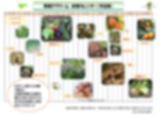 収穫カレンダー2019(画).png