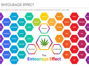 The Entourage Effect: The Synergy of Cannabis