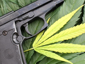 The Relationship between Medical Marijuana & Concealed Weapon License