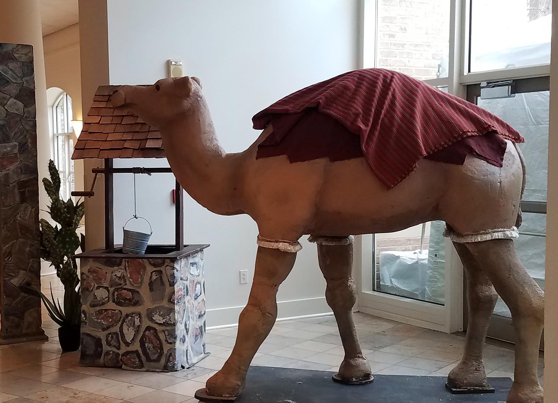Sylvester the Camel