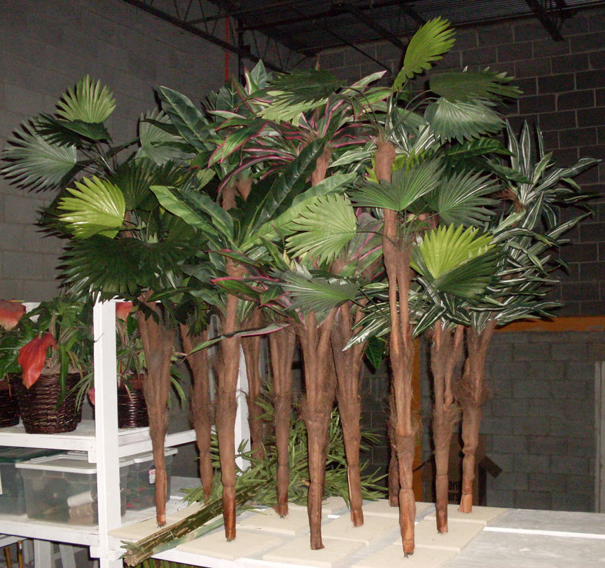 Fan Palm Foliage