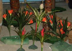 Tropical Flowers / Bromeliads