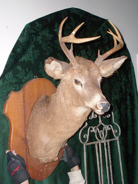 Deer Head Mount