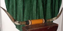 Longhorns 5ft