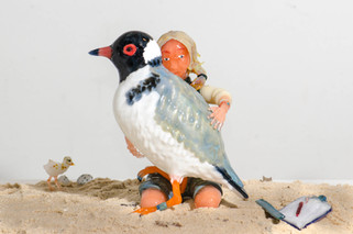 Hooded Plover and Jodie Dunn