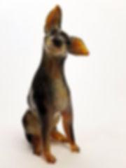 Rasta (English Toy Terrier)1.jpg