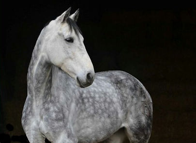 Clearhorse%20Animal%20Care%20Horse%202_e