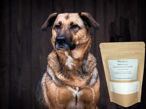 MSM Pulver für Ihren Hund