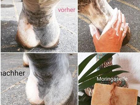 Anwendungsempfehlung bei Pferden mit Mauke: