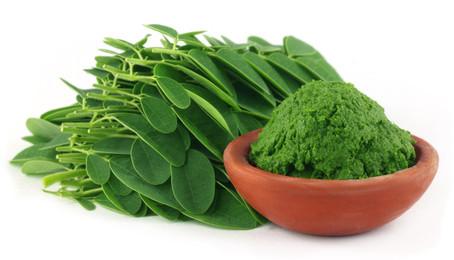 Essentielle Aminosäuren in Moringa und deren Bedeutung:
