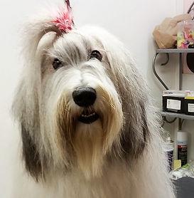 Dog Grooming | Demi's Dog House | Houston, TX