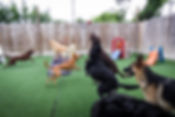 Boutique Dog Daycare Houston, TX | Web Cams