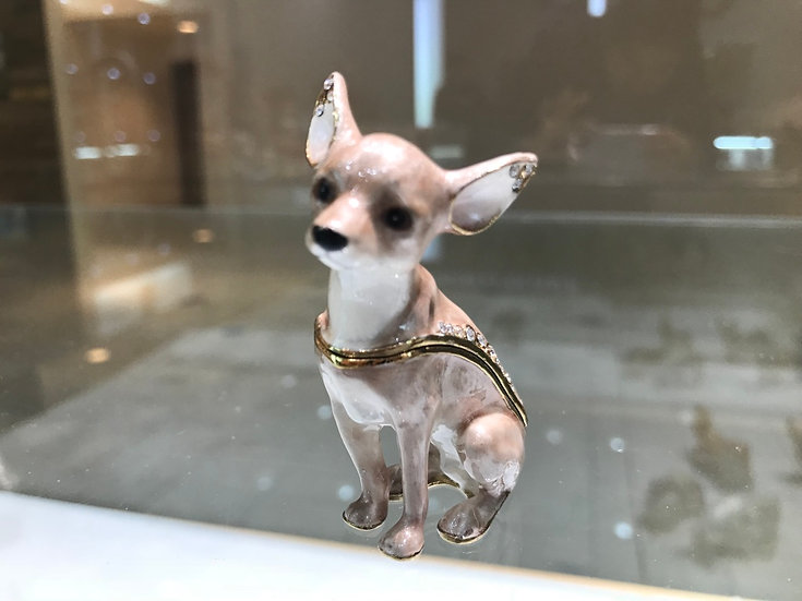Moonlight Chihuahua