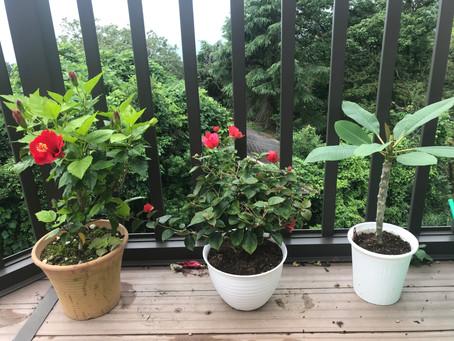 夏のトロピカル植物