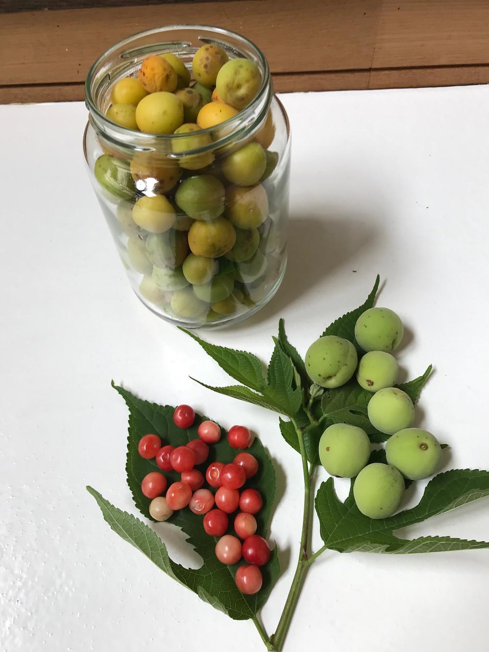 瓶の中が小梅、下の左の赤いのがユスラウメ、右の緑の大粒が南高梅