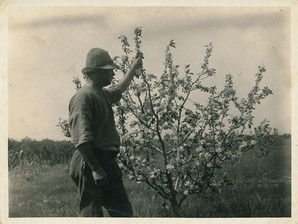 Ted Cook in his orchard