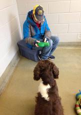 vol at animal shelter.jpg