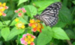 NI-20-Flowers-Butterfly.jpg