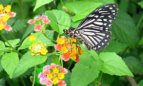 NI-20-Flowers-Butterfly.jpg