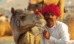 NI-05-Rajasthan-Camel-1.jpg