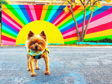 Street Life with Mural Dogs: Bode and Riley