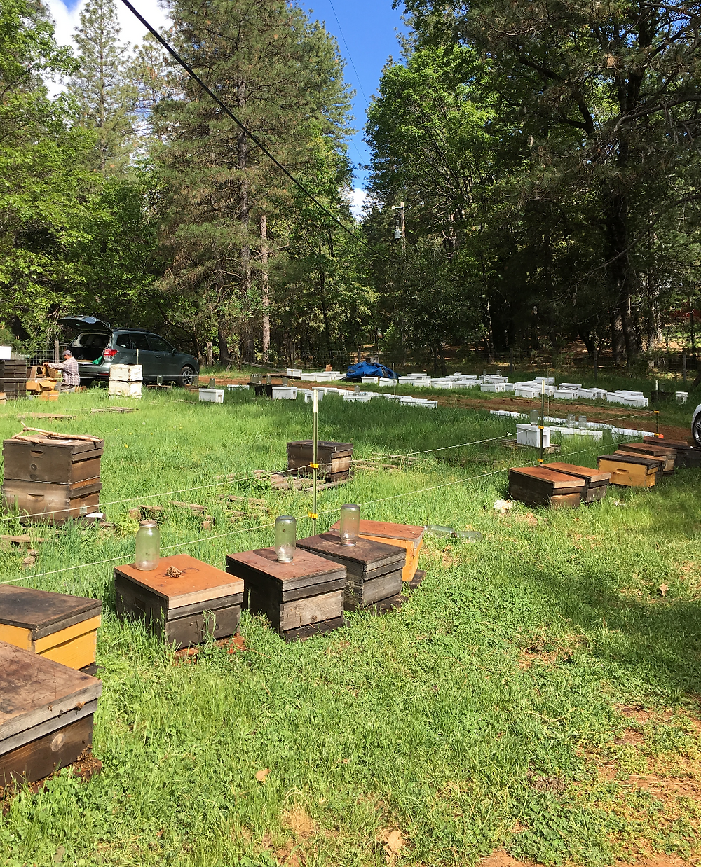 Oliver's HoneyBees Pick up near Grass Valley, CA