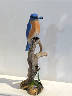 Eastern Bluebird with Dragonfly