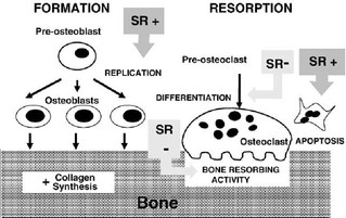Anabolic Agents as New Treatment Strategy in Osteoporosis