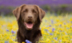 LocationPetPhotographer-Rugby-KathyBurge