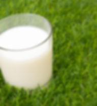 Glass of milk in grass.jpg