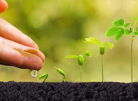Healthy Things Grow
