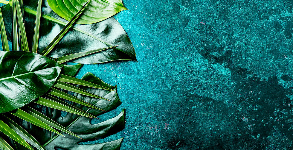 creative-tropical-leaves-background-tran