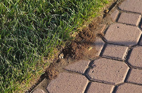 Fire-ant-mound-paver-stones.jpg